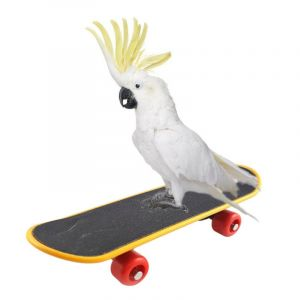Mini Skateboard Stand Perch for Fun, Exercise and Training - Bird Intelligence Toys for Parrots, African Greys, Budgies, Cockatiels, Parakeets, Lovebirds